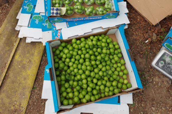 Termoblok adı verilen sistemle üretilen eriklerin kilosu 500 liradan satılıyor